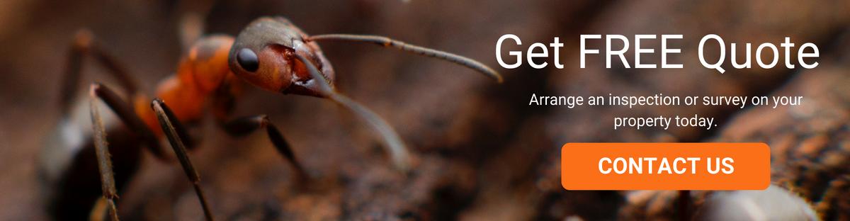 Termite Control Quote